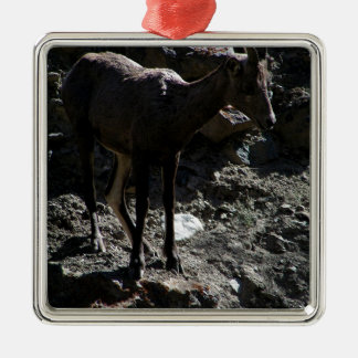 Rocky Mountain Bighorn Sheep, ewe Silver-Colored Square Decoration