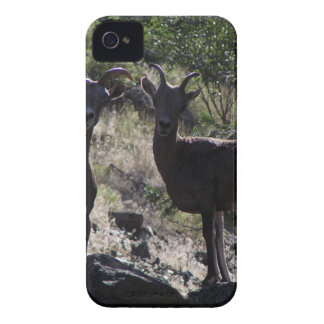 Rocky Mountain Bighorn Sheep iPhone 4 Cases