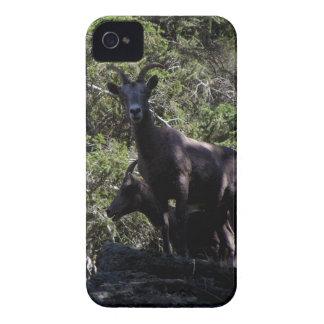 Rocky Mountain Bighorn Sheep, Keremeos, BC iPhone 4 Cases