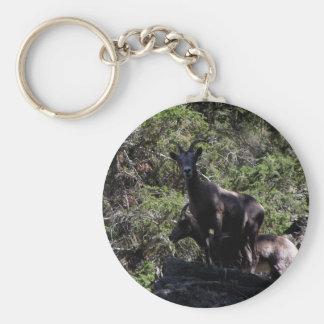 Rocky Mountain Bighorn Sheep, Keremeos, BC Key Ring