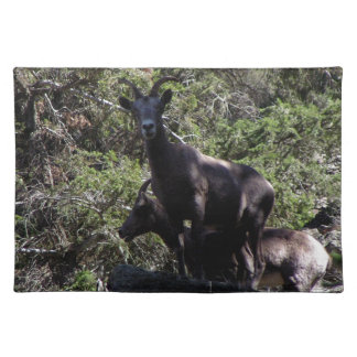 Rocky Mountain Bighorn Sheep, Keremeos, BC Placemat