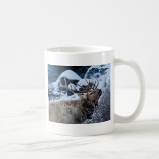 Rocky Mountain Elk Basic White Mug