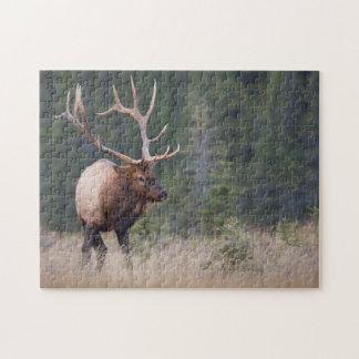 Rocky Mountain Elk Jigsaw Puzzle