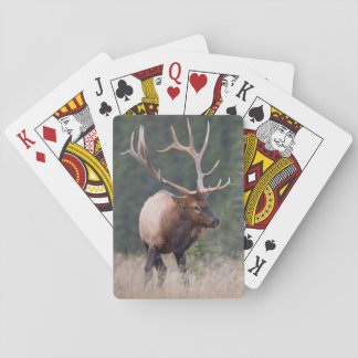 Rocky Mountain Elk Poker Deck