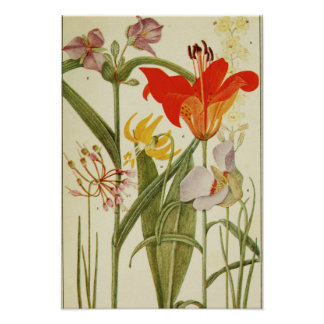 Rocky Mountain Flowers Poster