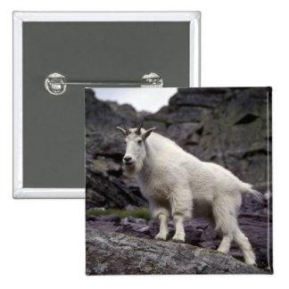 Rocky mountain goat 15 cm square badge