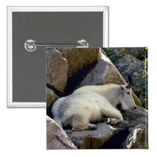 Rocky Mountain goat, Colorado 15 Cm Square Badge