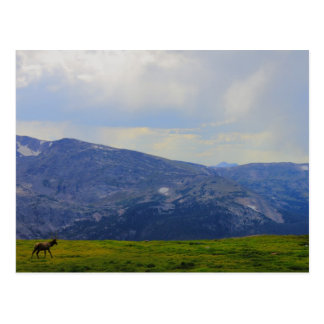 Rocky Mountain National Park, Colorado Postcard