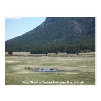 Rocky Mountain National Park in Estes park, CO Postcard