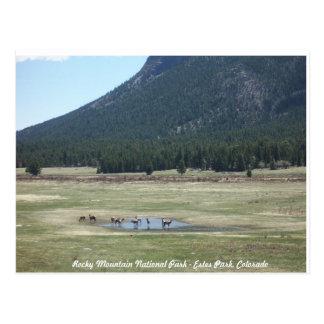 Rocky Mountain National Park in Estes park, CO Postcard
