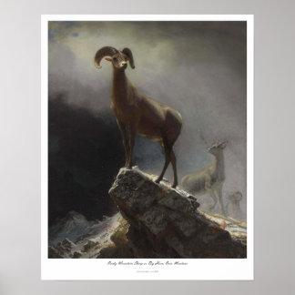 ROCKY MOUNTAIN SHEEP – ALBERT BIERSTADT POSTER