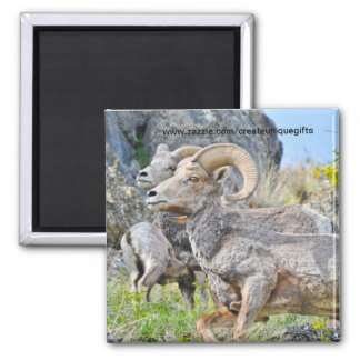 Rocky Mountain Sheep Fridge Magnet