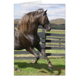 Rocky Mountain Stallion Card