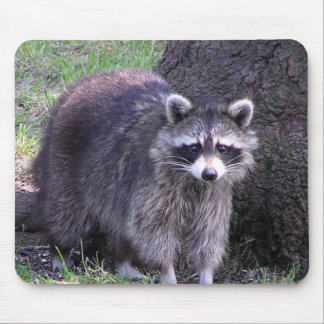 Rocky the Raccoon Mouse Pad