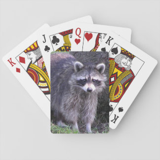 Rocky the Raccoon Playing Cards