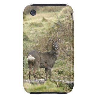 Roe Deer Buck iPhone 3G/3GS Case-Mate Tough iPhone 3 Tough Cases