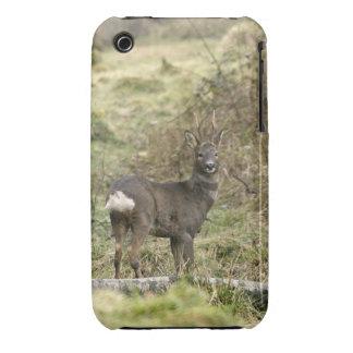 Roe Deer Buck iPhone 3G/3GS Case-Mate Tough Case-Mate iPhone 3 Cases