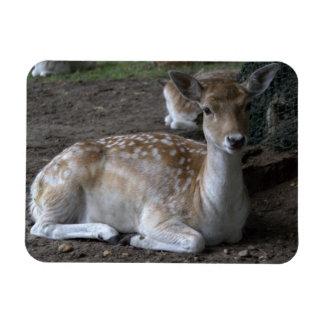 Roe deer rectangular photo magnet