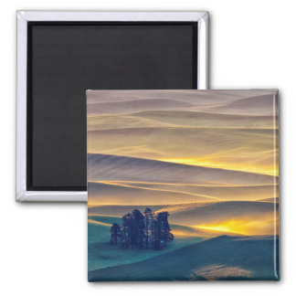 Rolling Hills of Wheat at Sunrise | WA Magnet