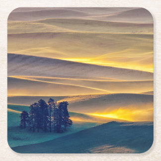 Rolling Hills of Wheat at Sunrise | WA Square Paper Coaster