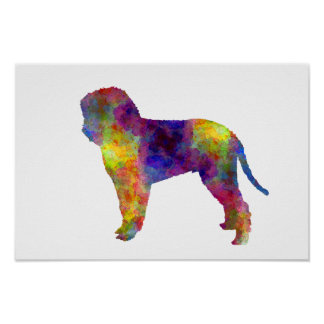 Romagna Water Dog in watercolor Poster
