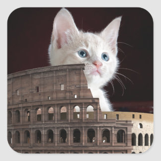 roman kitty square sticker