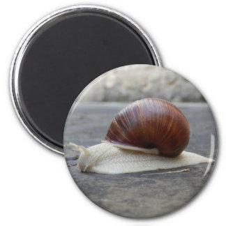 Roman Snail Magnet