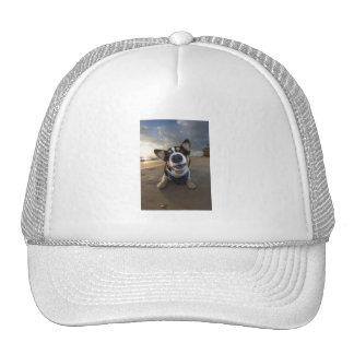 Romance Instructor Mesh Hat