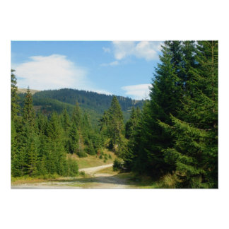 Romania, Moldova, Pine forests in the mountains Print