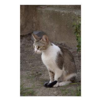 Romania, Transylvania, Sighisoara. Pet cat. Photo