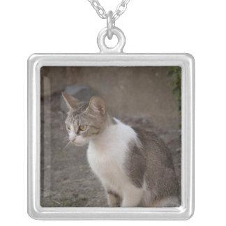 Romania, Transylvania, Sighisoara. Pet cat. Square Pendant Necklace