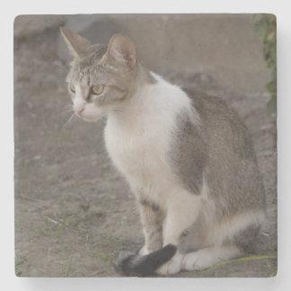 Romania, Transylvania, Sighisoara. Pet cat. Stone Beverage Coaster