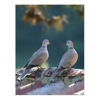 Romantic Doves Postcard