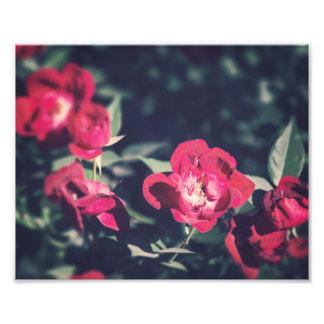 Romantic Garden Flowers | Photo Print