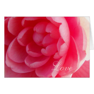 Romantic Pink Camellia /Macro Floral Photography Greeting Card
