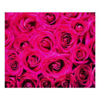 Romantic Pink Purple Roses, Floral, Flowers Poster