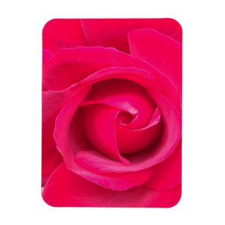 Romantic Red Pink Rose Magnet