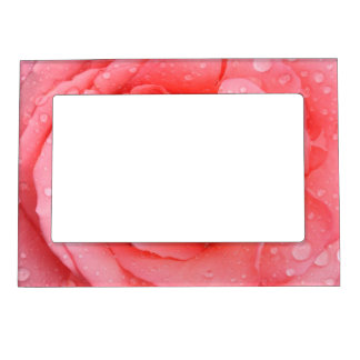 Romantic Red Pink Rose Water Drops Magnetic Frame