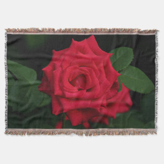 Romantic Red Rose Flower in Bloom in the Garden