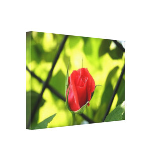 Romantic Red Rose Flower Modern Wall Art