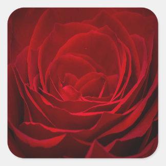 Romantic Red Rose in Full Bloom Square Sticker