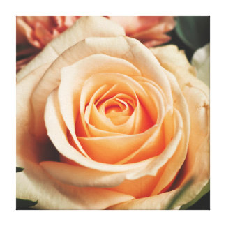Romantic Rose Pink Rose Canvas Print