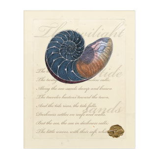 Romantic Seashell Acrylic Wall Art