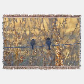 Romantic sparrow bird couple on a wire, Photo