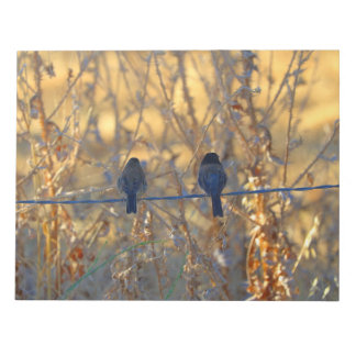 Romantic sparrow bird couple on a wire, Photo Notepad