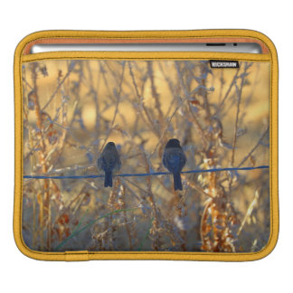 Romantic sparrow bird couple on a wire, Photo Sleeves For iPads