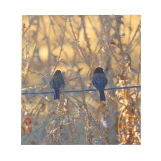 """Romantic sparrow bird couple on wire, 5.5x6"""" Photo Notepads"""