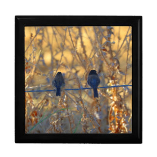 Romantic sparrow bird couple on wire, Large Photo Large Square Gift Box