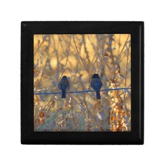 Romantic sparrow bird couple on wire, Small Photo Small Square Gift Box