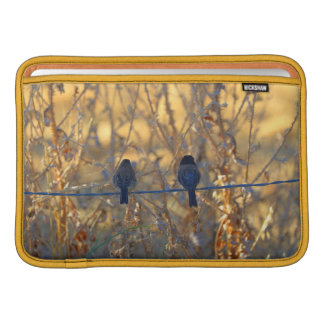 "Romantic sparrow bird couple photo, 11"" Air MacBook Sleeves"